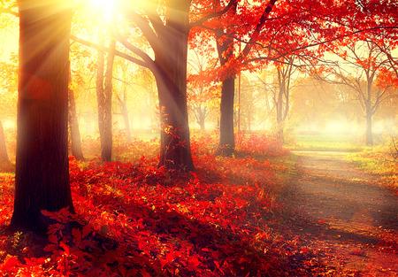 秋天的英语表达